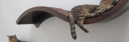 Floating shelves for cats!